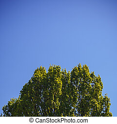 Treetop in Spring - One part of a tall tree, treetop in...