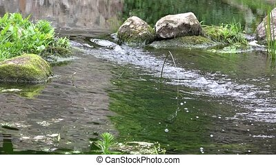 River brook stream water flow between stones in park. 4K -...