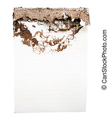 damaged paper eaten by termite on white background
