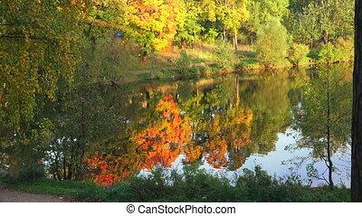 Autumn forest. Lake. Autumn Landscape. 4K. - Autumn forest....