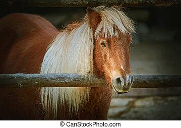 Portrait of Chestnut Pony with White Mane