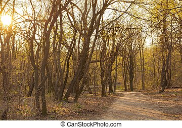 Sunset in the forest in spring