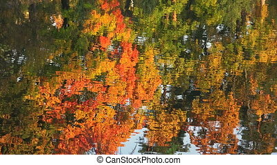 Reflection of autumn trees in the water. Autumn Landscape....