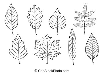 set of hand drawn leaves - vintage set of hand drawn leaves...