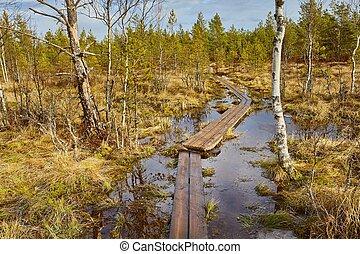 Swamps in Finland - Walking trail in a swamp in Finland