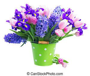 hyacinths and tulips - Pink tulips and blue hyacinths and...