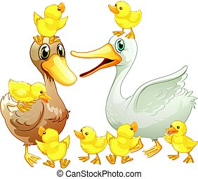 Duck family with little ducklings