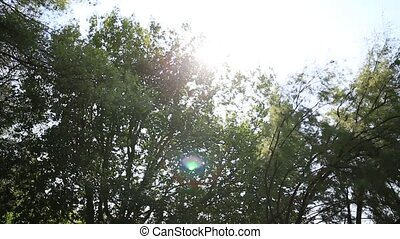 The glare of the sun through the branches in forest