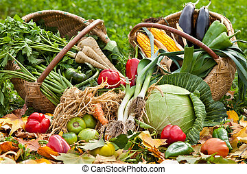 Fresh raw vegetables in grass - Pile of various raw fresh...
