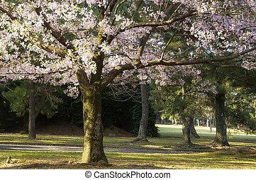 sakura - Autumn in japan