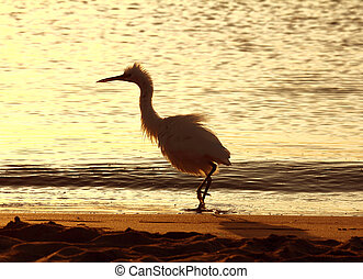 fun disheveled heron bird on coastline at morning
