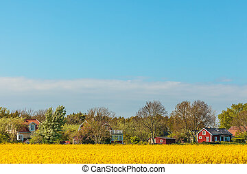Typical red Swedish houses in summer with blooming coleseed