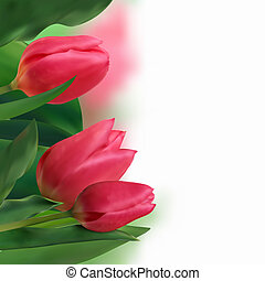 Bouquet of tulips on a white background.