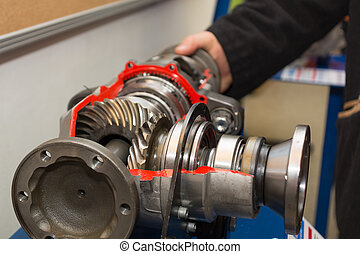 Front Axle Gear - Look inside - Model of a front axle gear...