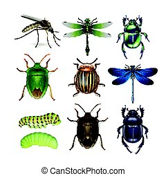 Set of different insects - Vector set of different insects...