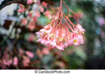 Pink Flowers in Blurred Background