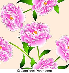 Pink Peony Flower on Beige Ivory Background. Vector...