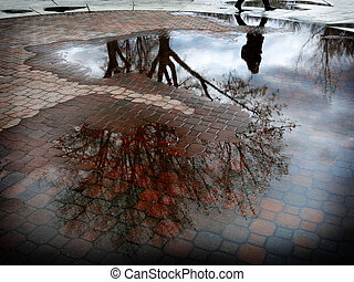 Reflection of Tree in Puddle of Water After Sorm -...