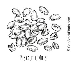 Handful of pistachio nuts. Vector illustration of nuts...
