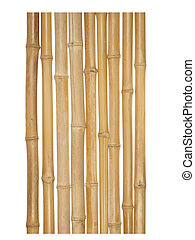 The trunks of various thicknesses of dry bamboo isolated on...