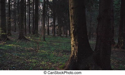 Spring forest in the rays of the setting sun