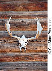 Deer Skull - Deer skull with antlers