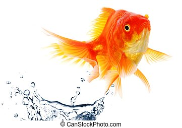 goldfish jumping showing escape success or freedom concept
