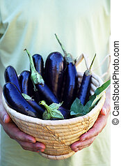 Aubergines in a basket a man holds in his hands