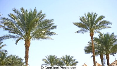 Palm trees in tropical resort. Blue sky in summer.