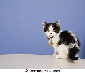 Cute Kitten - Young kitten in a foster program until he's...