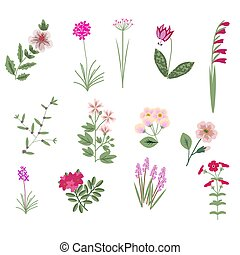 Pink vector flowers - Pink vector isolated flowers...