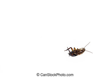isolated dead cockroach on white background