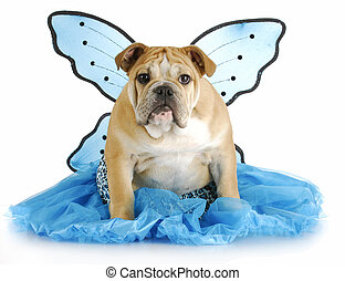 dog angel - english bulldog puppy wearing blue angel costume...