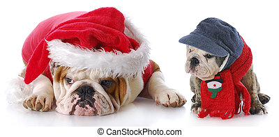 santa dog with puppy