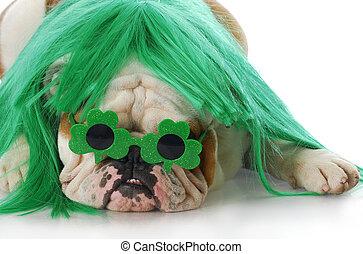 st patricks day dog - english bulldog wearing green wig and...