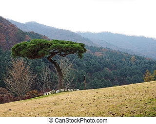 A tree standing alone in the grass field