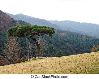 站立, 領域, 草, 樹, 單獨