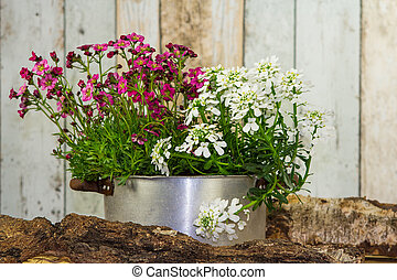 Flowers are planted in a vintage flowerpot. - Flowers are...