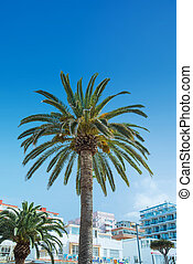 Image of a palm tree growing in the city