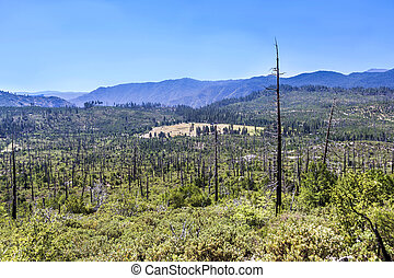 burned down forest in Yosemite national park - burned down...