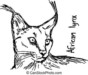 african lynx - vector illustration sketch hand drawn with...