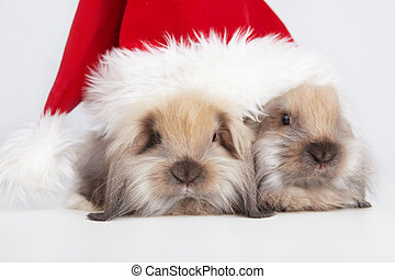 Christmas Rabbits - Two little rabbit in a Christmas cap