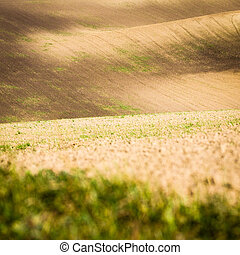 Panoramic view of cultivated field in South Moravia,...