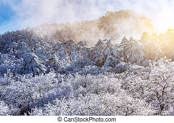 Frozen forest in Huangshan National park. - Sunrise above...