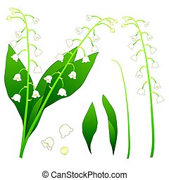 White Lily of the Valley. isolated on White Background....