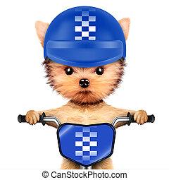 casque, Vélo,  adorable, Chiot, séance