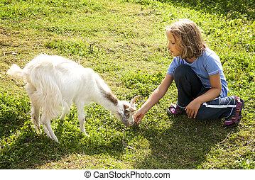 Girl Feeding Goat - Little girl feeding goat on farm.