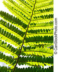 Macro of fern leaf