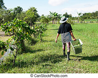 Thai women walking and harvest agriculture vegetables and fruits in grow plant crops at garden