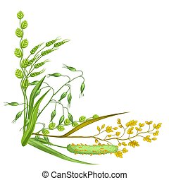 Corner with herbs and cereal grass. Floral design of meadow plants